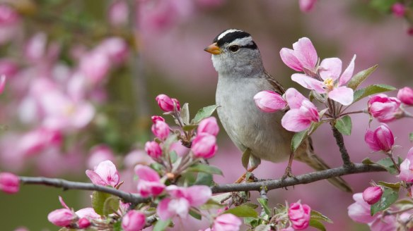 13897-free-spring-animal-desktop-wallpaper_59052